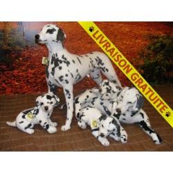 Famille Dalmatien